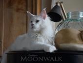 DSC_7454-Chatterie-Moonwalk