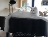 DSC_7457-Chatterie-Moonwalk