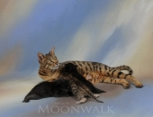 Anciens chaton de divine, moonwalk Iron, Inky et Iochi  2013 - Chatterie Moonwalk