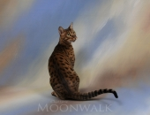Ancien chaton de divine, Emotion pere Kiwanga Crylain - Chatterie Moonwalk