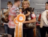 I love you classe chaton best in show - Chatterie-Moonwalk
