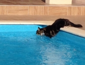 chat piscine-Chatterie-Moonwalk