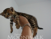 Moonwalk Nocibé F3 - chatterie Moonwalk