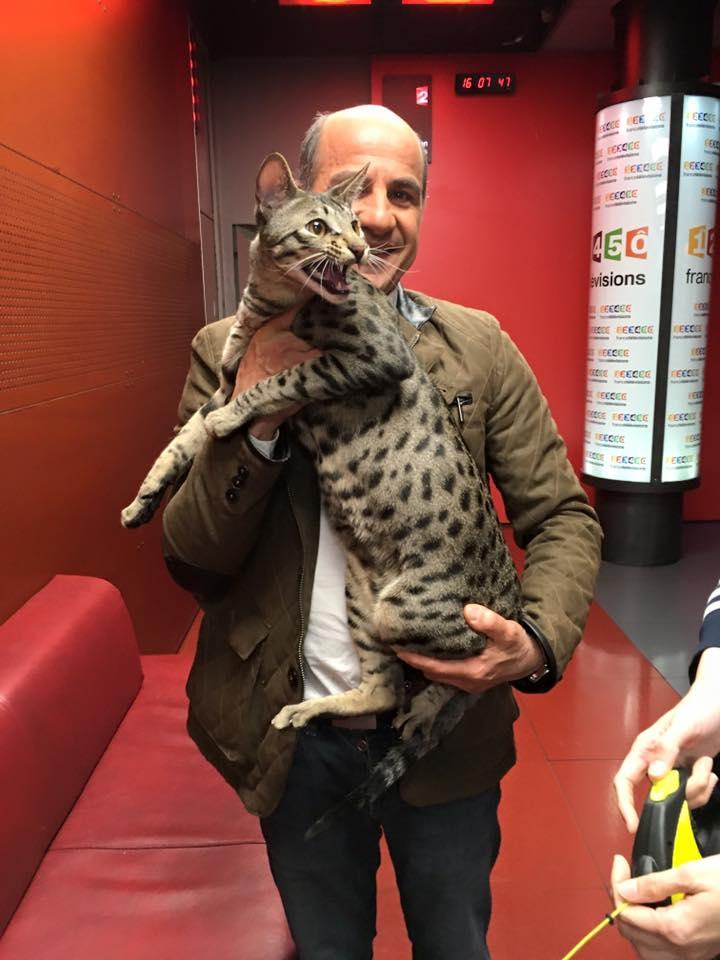 """Yves Lahiani le chroniqueur vétérinaire de """"c'est au programme"""" avec Moonwalk Lanister Mâle Savannah F6 de 14 mois pour presque 10kg"""