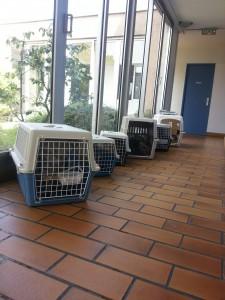 Salle d'attente encombrée