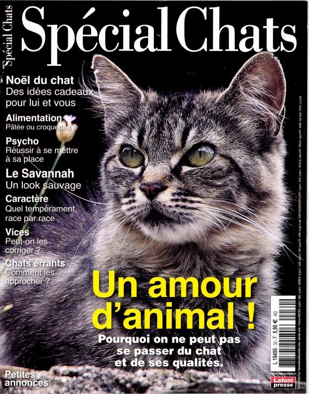 spécial chat n°30