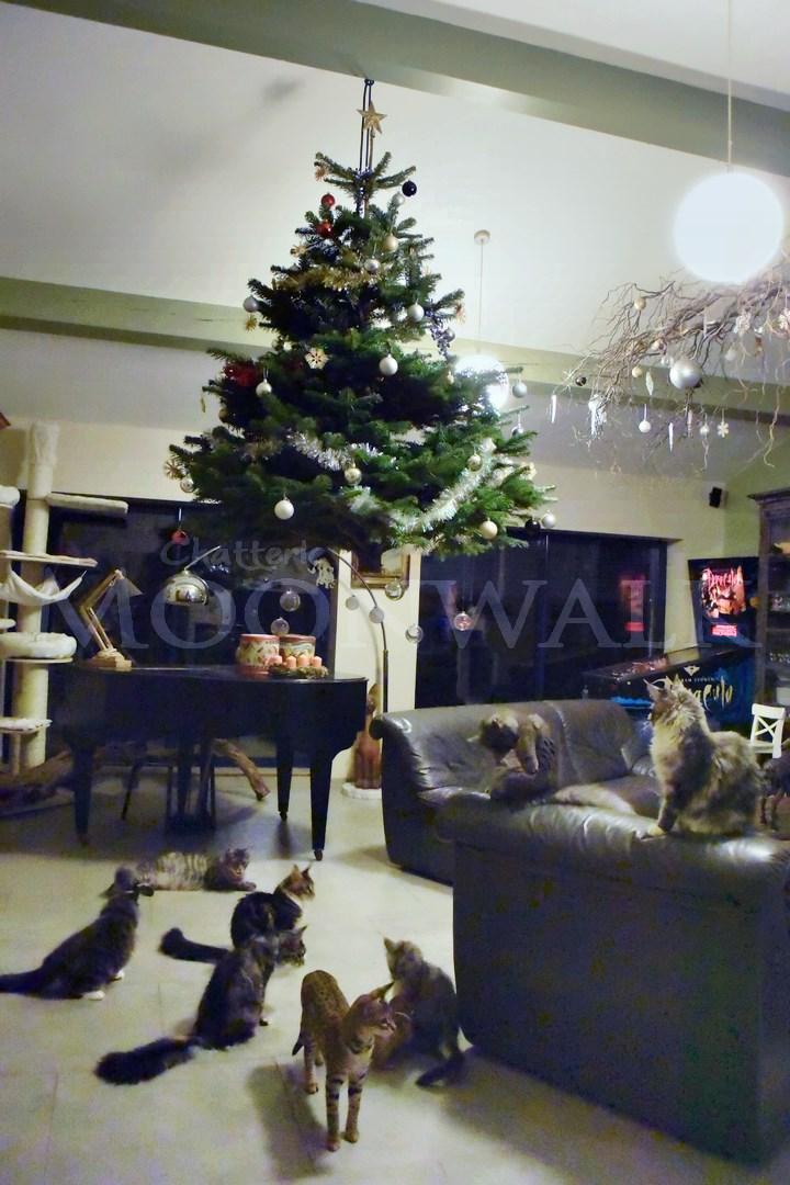 Sapin de Noël spécial chats