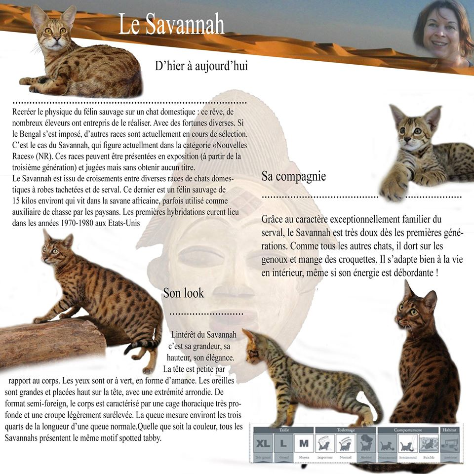 Fiche Savannah - Chatterie Moonwalk