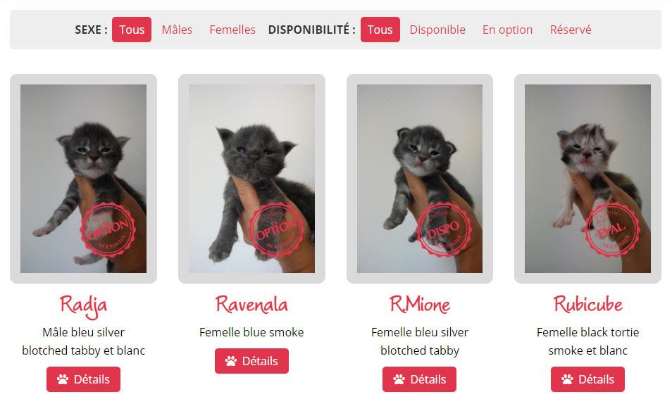 Liste des chatons avec le nouveau système de filtre